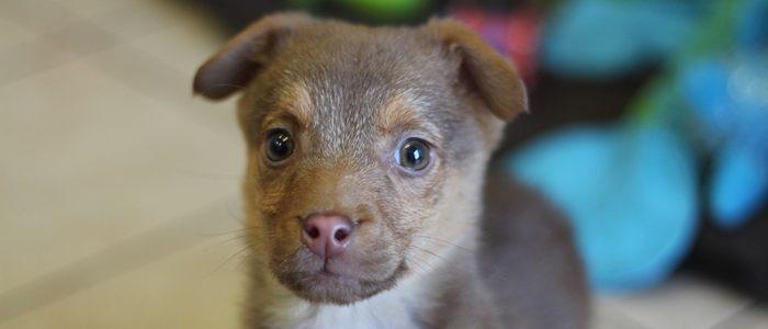 Coco- adoptowana