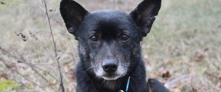 Baflo- pies do adopcji