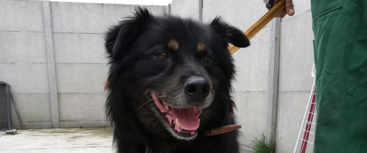 Znaleziono psa- Sielce, gmina Końskowola
