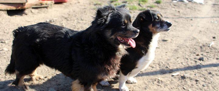 Bunia i Bessi- suczki do adopcji