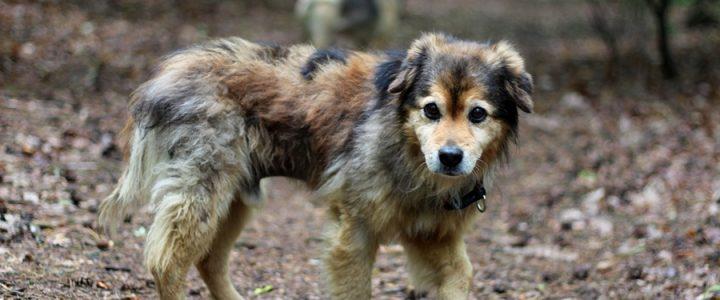Mufo- pies do adopcji