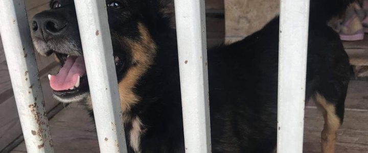 Znaleziono psa- Leokadiów, gmina Puławy