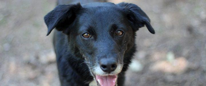 Cygan- pies do adopcji