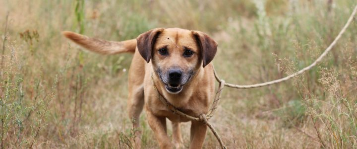 Pucek- pies do adopcji