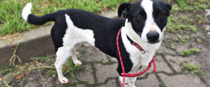 Milton- pies do adopcji