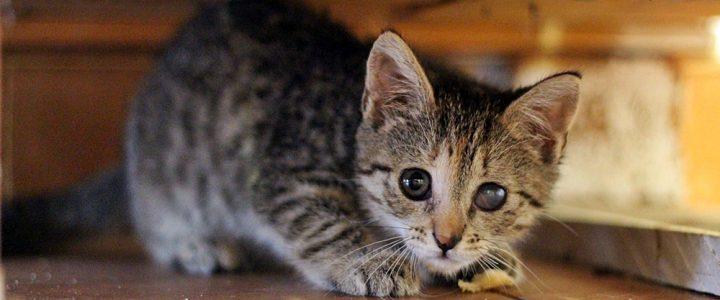 Tofina- adoptowana