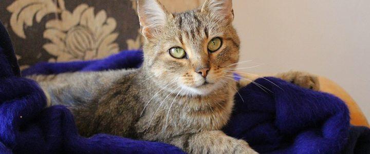 Antonina- adoptowana