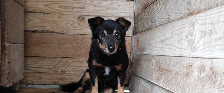 Znaleziono psa- gmina Kurów