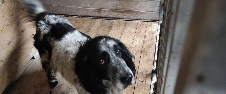 Znaleziono psa (Piorun)- odebrany przez właściciela