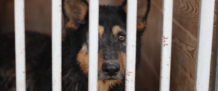 Znaleziono psa- Skowieszyn