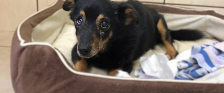 Bazyli- pies do adopcji