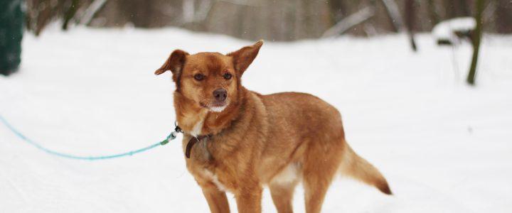 Felek- pies do adopcji