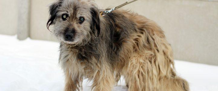Znaleziono psa- Czesławice