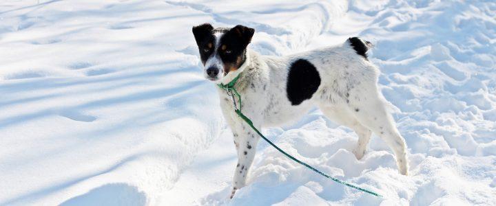 Ziółko- pies do adopcji