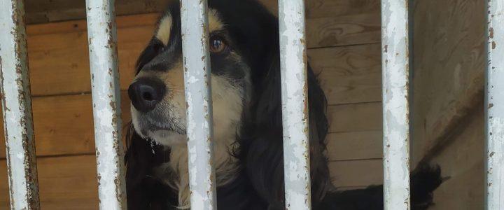 Znaleziono psa- Obliźniak