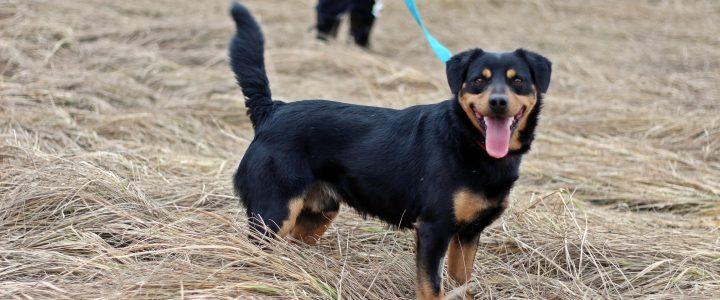Karmel- pies do adopcji
