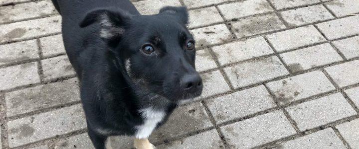 Blusia- adoptowana