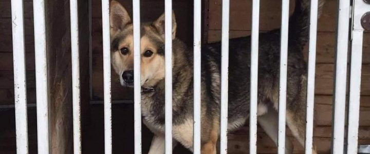 Znaleziono psa (Feliks)- adoptowany