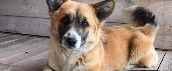 Znaleziono psa (Sanczo)- adoptowany