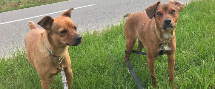 Kinia i Dita- suczki do adopcji