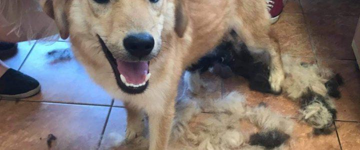 Znaleziono psy- Nałęczów