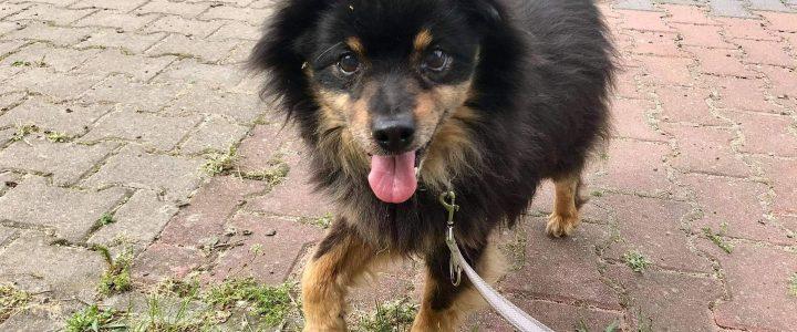 Panki- pies do adopcji