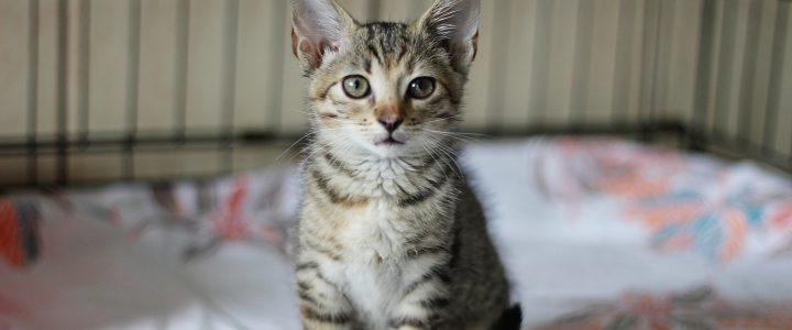 Dafi- adoptowana
