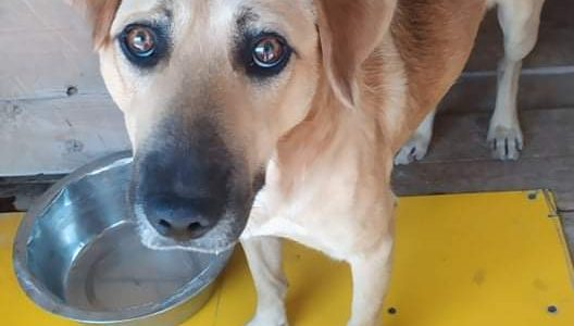 Znaleziono psa- Klikawa