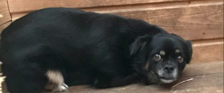 Znaleziono psa- Sadurki