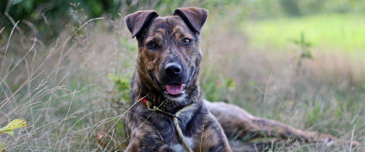 Zadzior- pies do adopcji